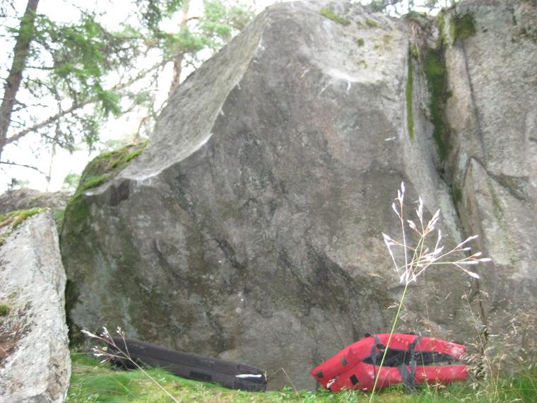 Zen kivi
