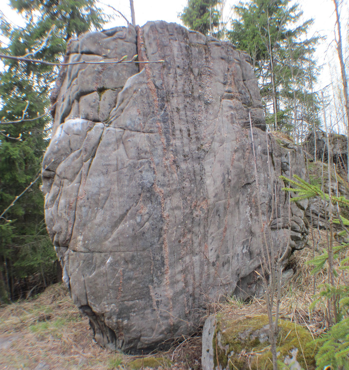 Hieno kivi