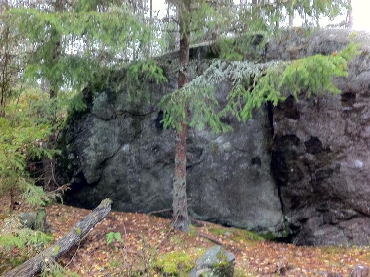 Lilla skogsväggen